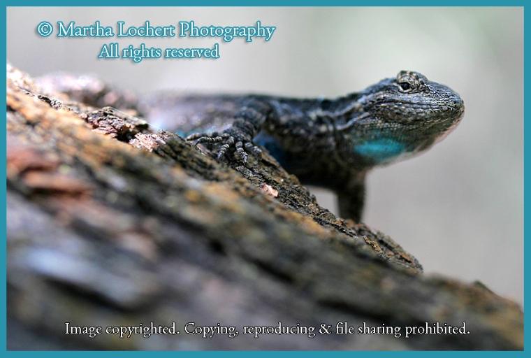 014_lizard_4925