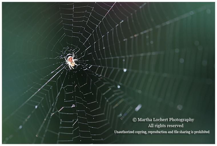 Spider_9141