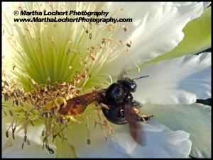 Bee_1330