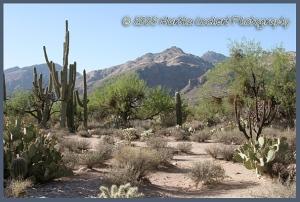 Catalina Mountains from Sabino Canyon