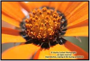 OrangeFlower_9709