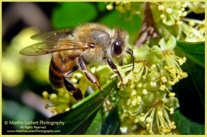Bee_1587