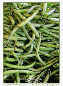 green beans0768