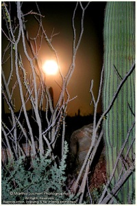 MoonriseSaguaros_7026