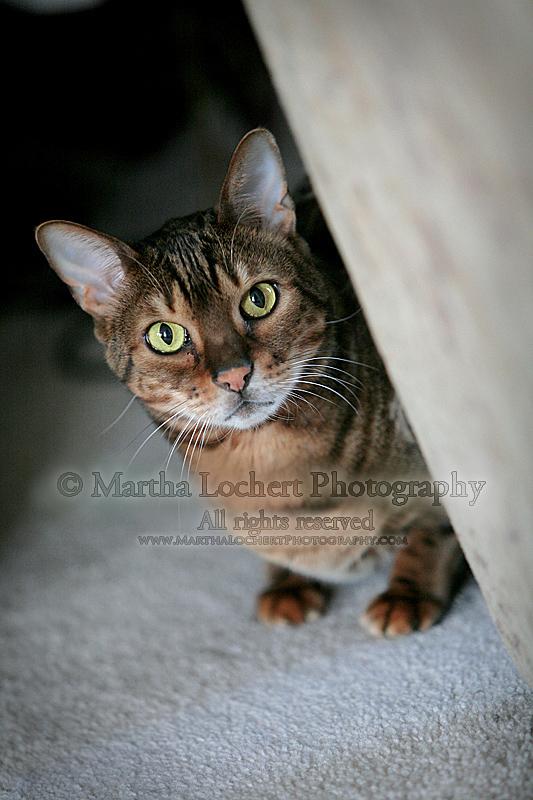 cat_0226