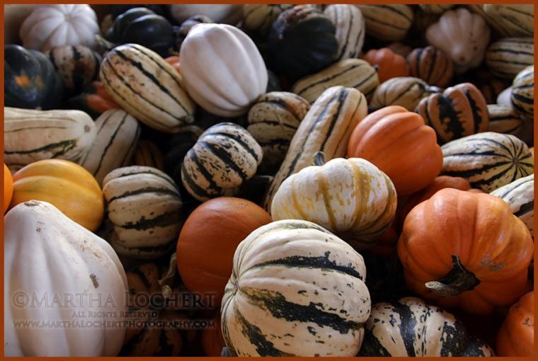 PumpkinsSquash_6946