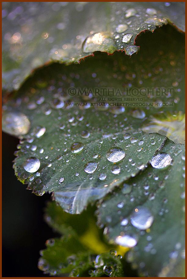 RaindropsIvyCascadeLake2062