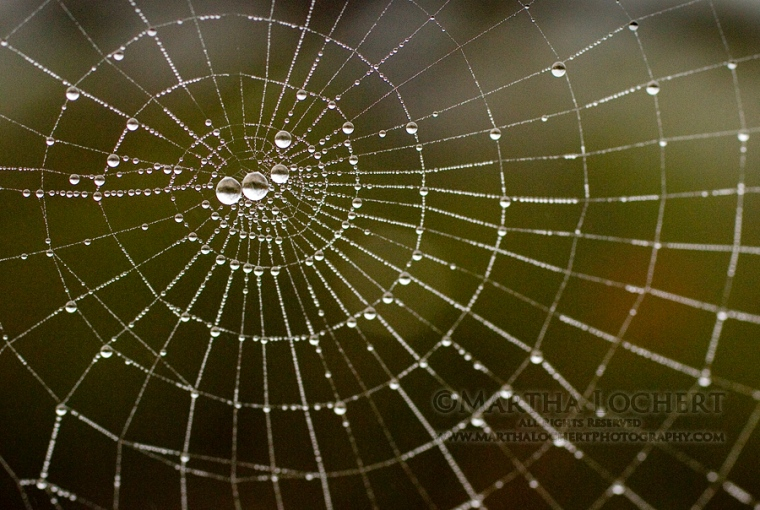 Raindrops on spiderweb, as captured by Tucson photographer Martha Lochert