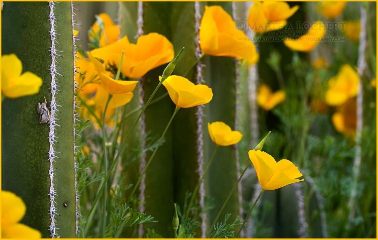 WildflowersMarch7473-1200px