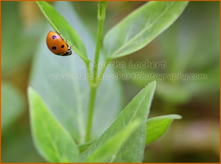 Ladybug_6304