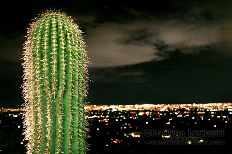 Saguaro and skyline at night by Tucson photographer Martha Lochert.