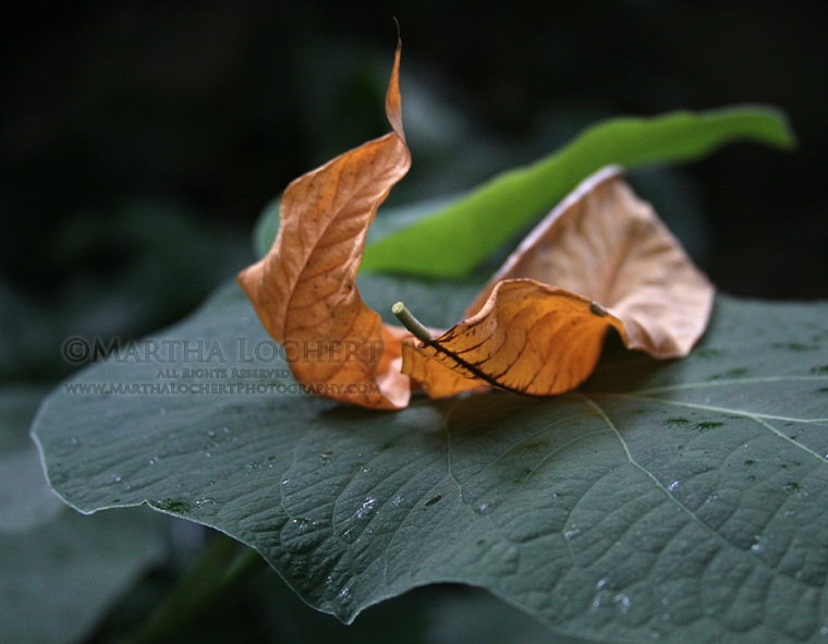 ... the sculptural beauty of the fallen leaves.