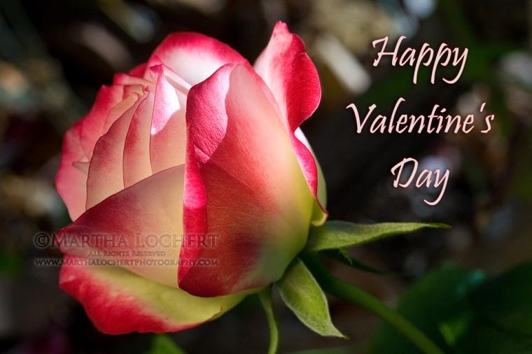 388_valentines_9641_1000px